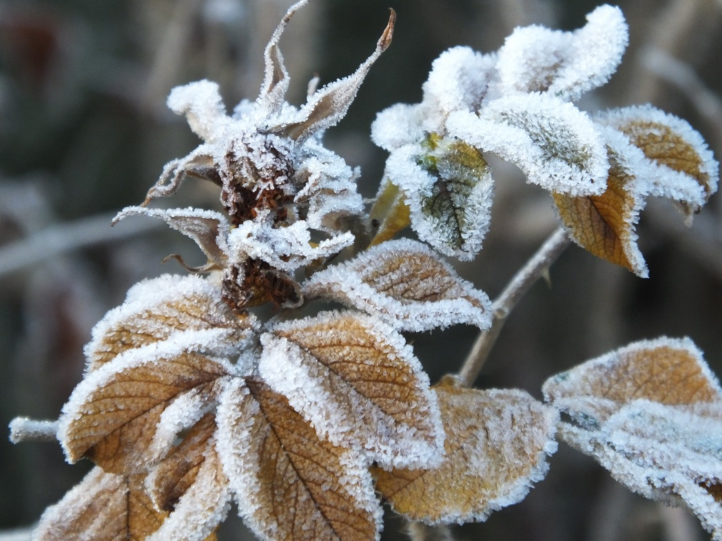 Декабрь. Мороз.
