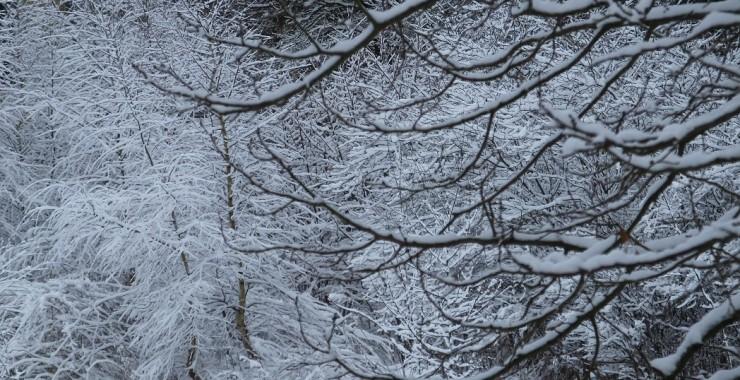 Первый настоящий снег.