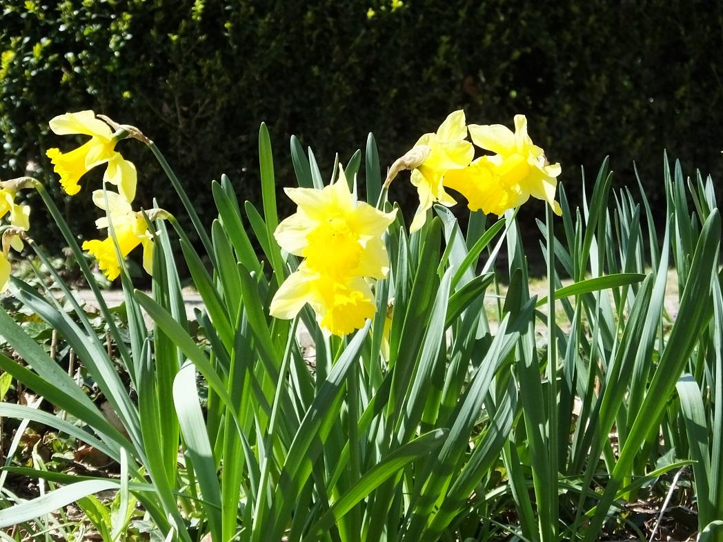 Саксонская Швейцария весной.