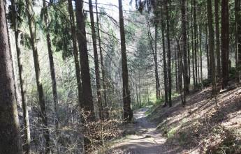 Лесная тропинка. Апрель. Саксонская Швейцария.
