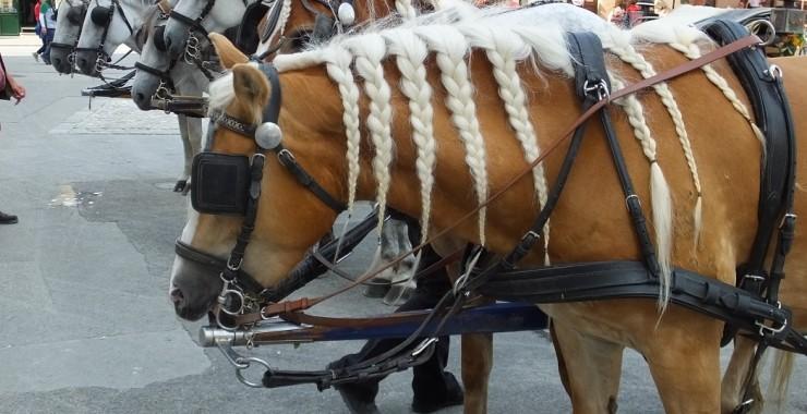 Лошади. Зальцбург. Тур по Баварии и Австрии.